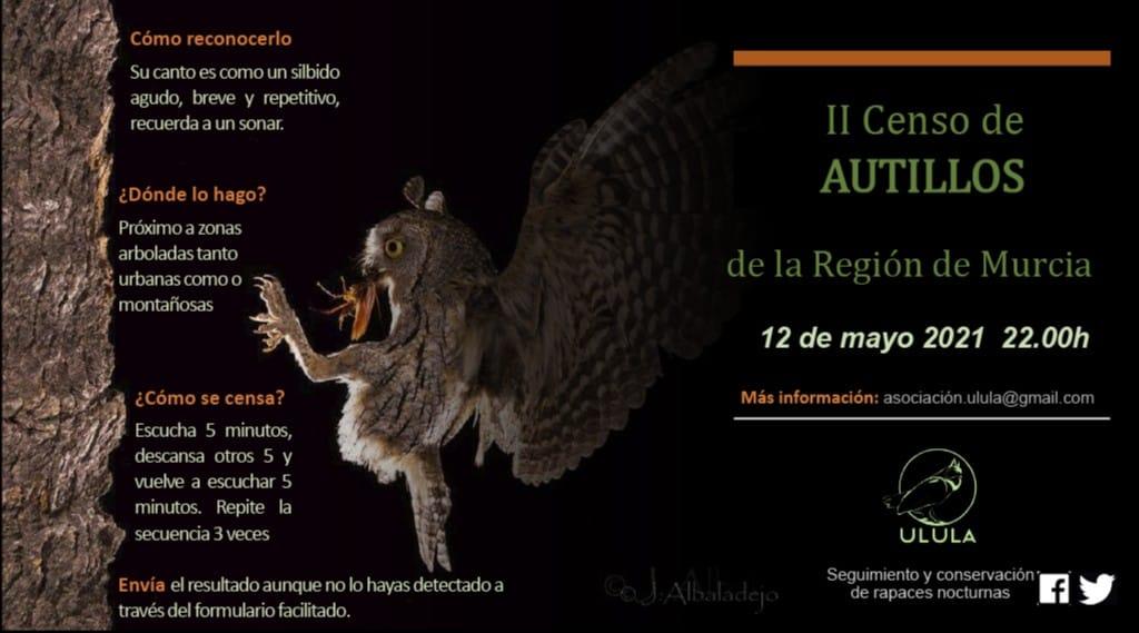 Censo urbano y periurbano de autillo en la ciudad de Murcia, con Ulula