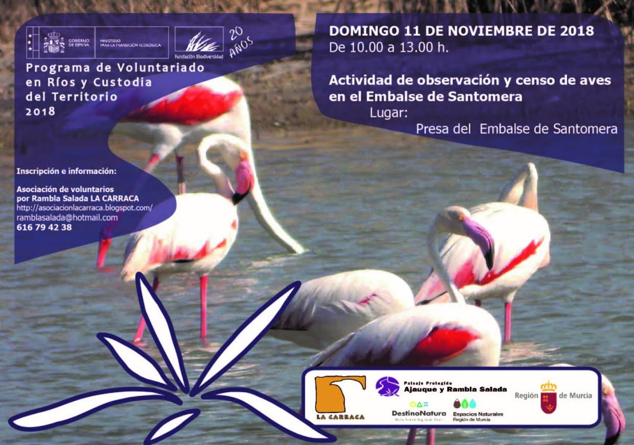 Censo de aves en el embalse de Santomera, con La Carraca