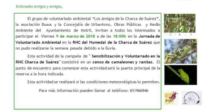 Censo de camaleones  y ranitas, con Los Amigos de la Charca de Suárez