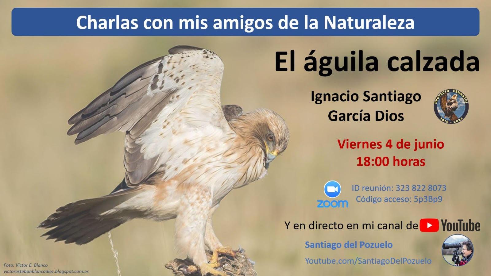 Charla sobre el águila calzada, con Santiago del Pozuelo