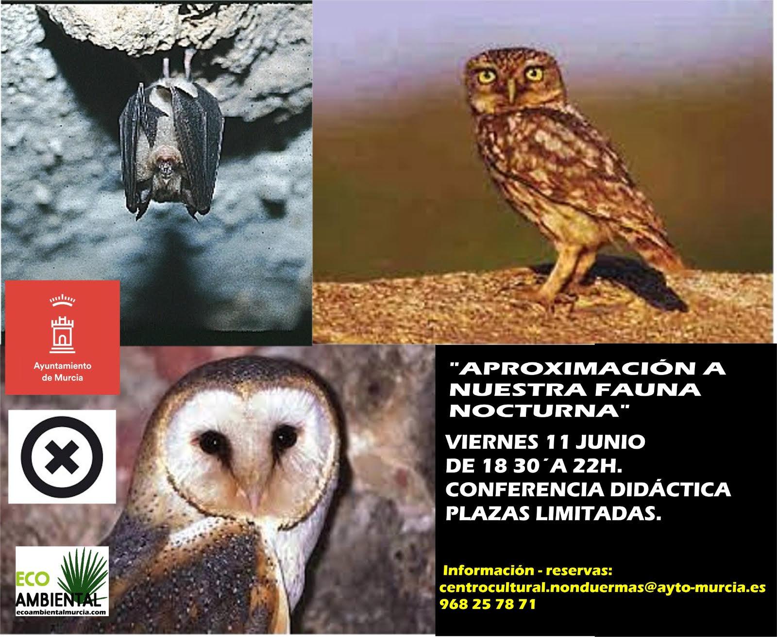 Charla sobre fauna nocturna, con EcoAmbiental