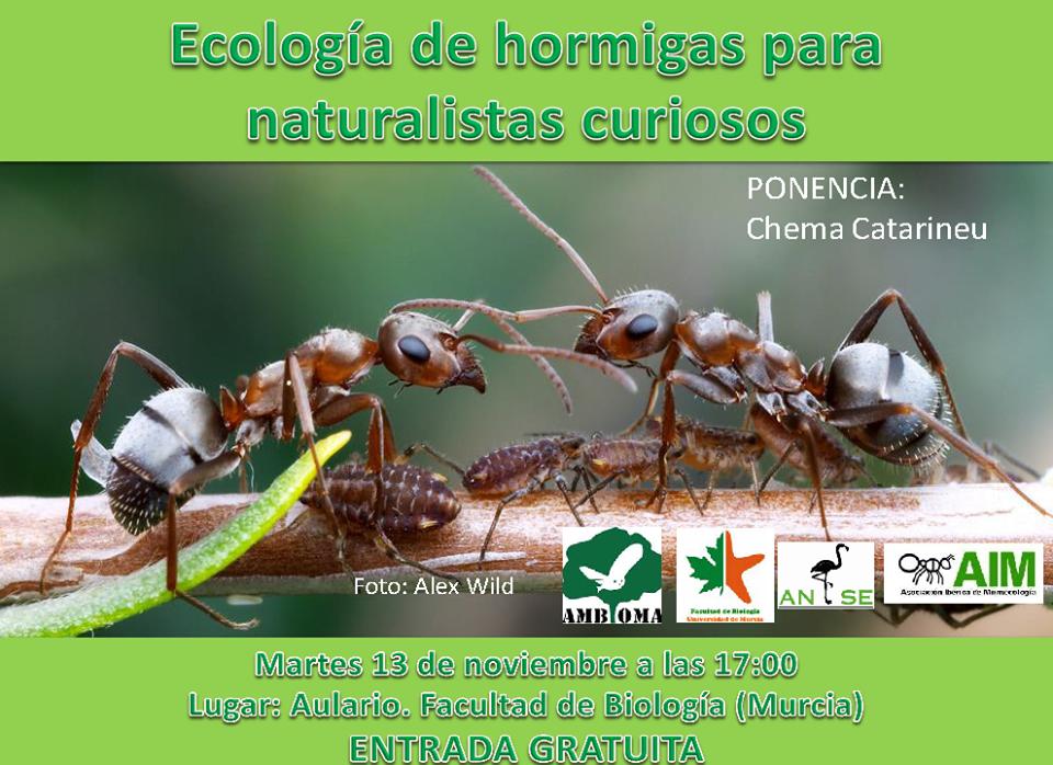 Ecología de hormigas para naturalistas curiosos, con AMBIOMA
