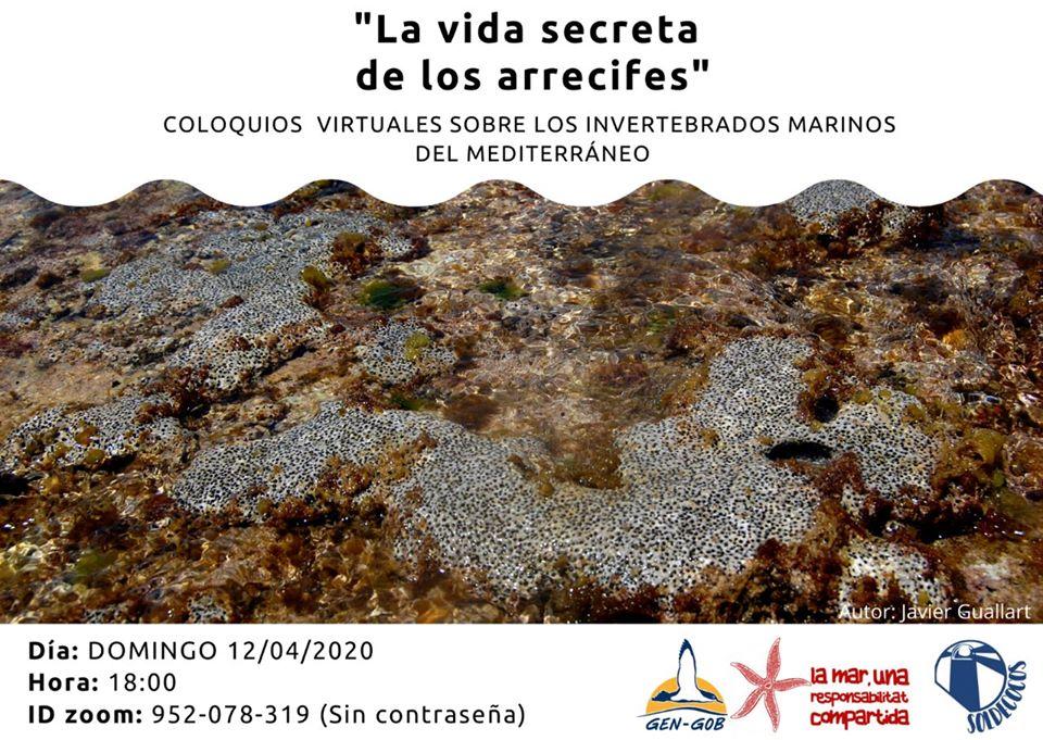 Chalra on line sobre arrecifes, con GEN-GOB y Soldecocos