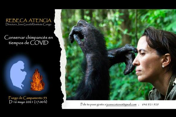 Charla sobre la conservación de chimpancés, con Fuego de Campamento
