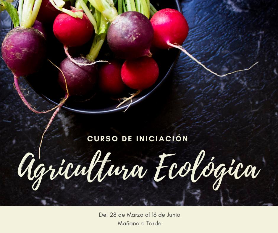 Curso de Iniciación a la Agricultura Ecológica con la UMH
