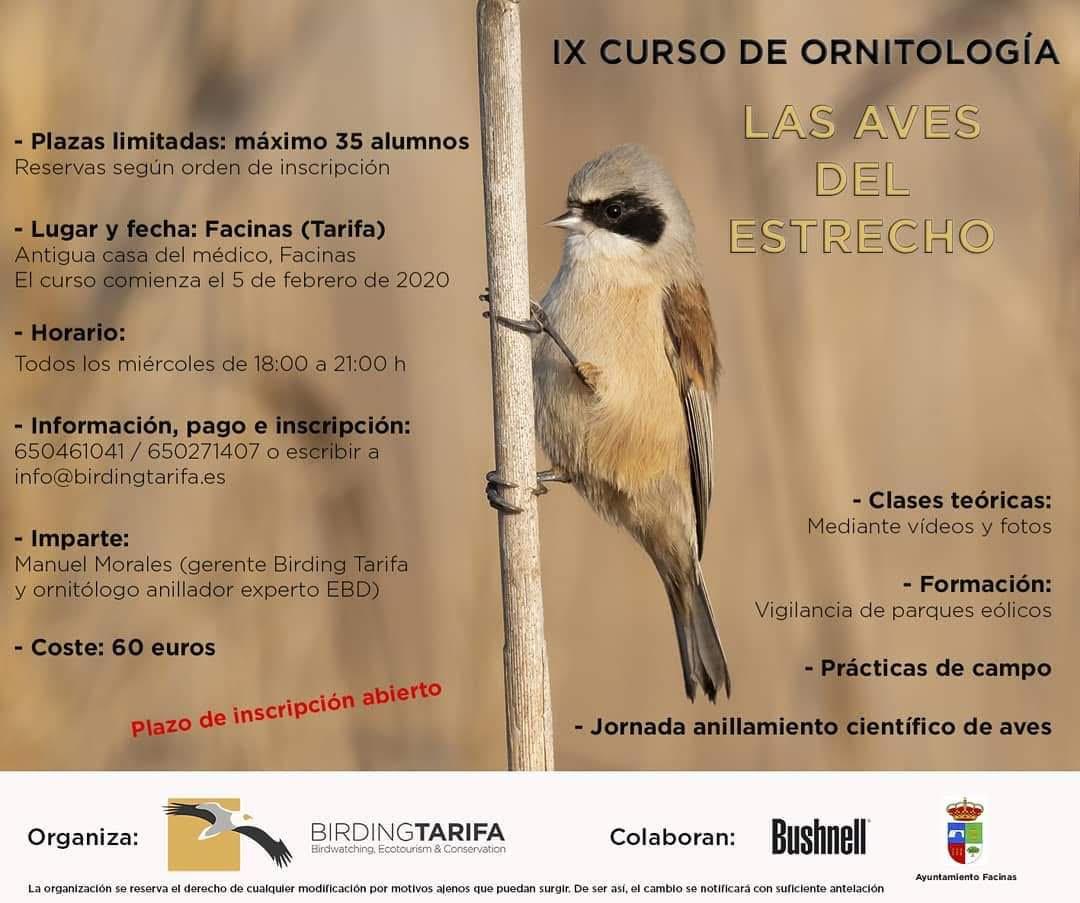 Curso de aves del Estrecho, con Birdingtarifa