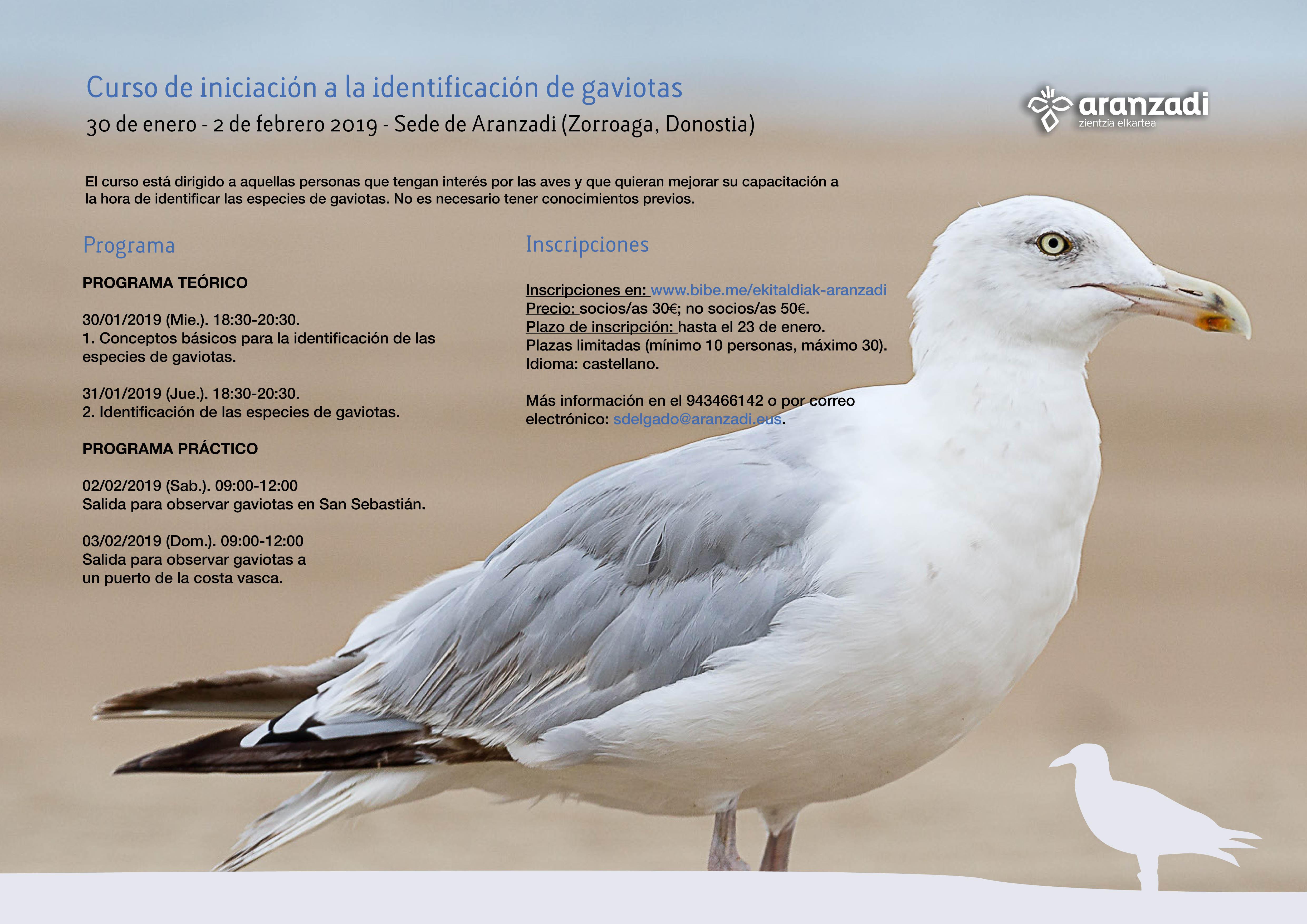 Curso de iniciación a la identificación de gaviotas, con Aranzadi