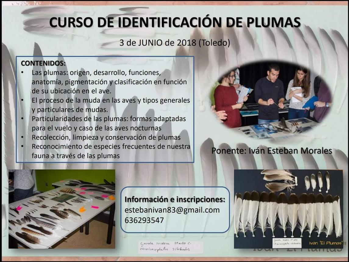 Curso de Identificación de Plumas, con Iván Esteban Morales