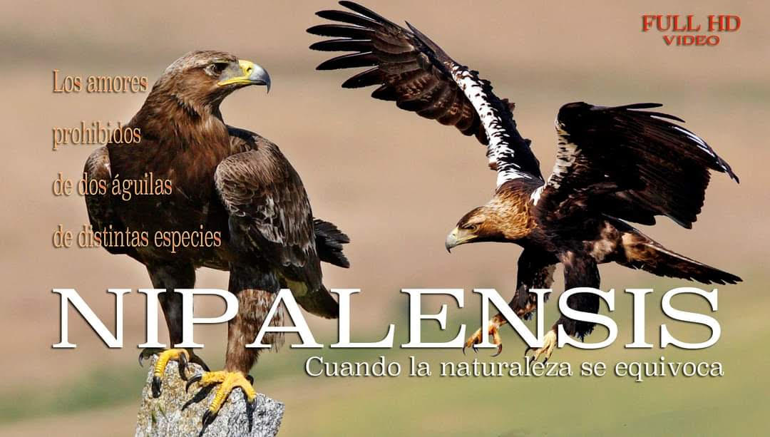 Documental 'Nipalensis', de José Luis Rodriguez