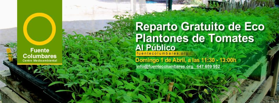 Reparto gratuito de plantones de eco tomates, con FUENTE DE COLUMBARES