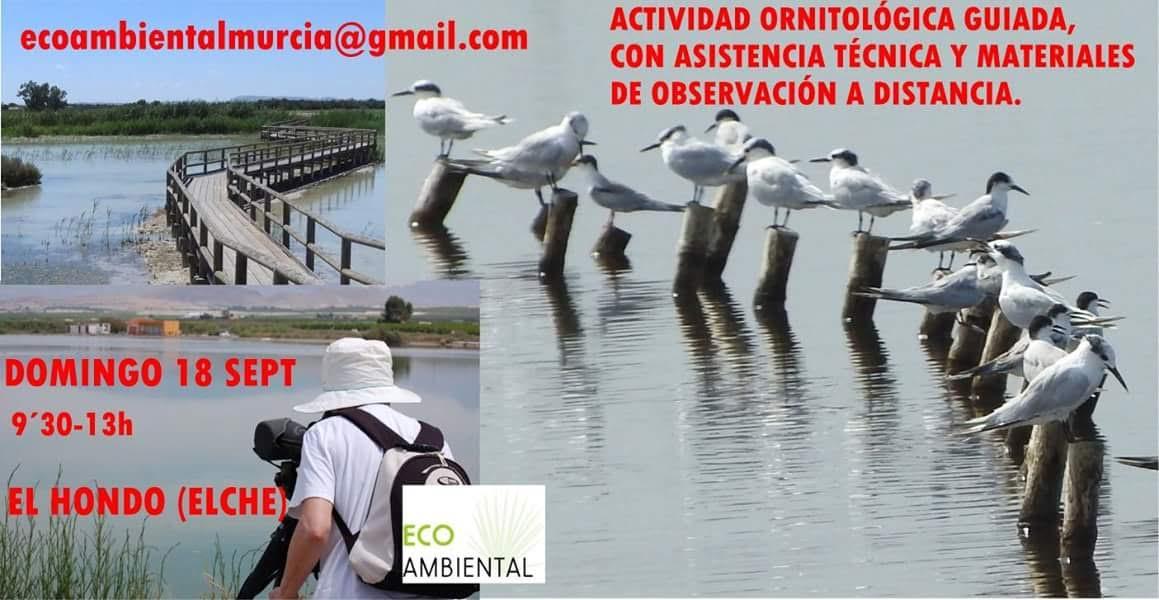 Ruta ornitológica guiada en El Hondo, con EcoAmbiental