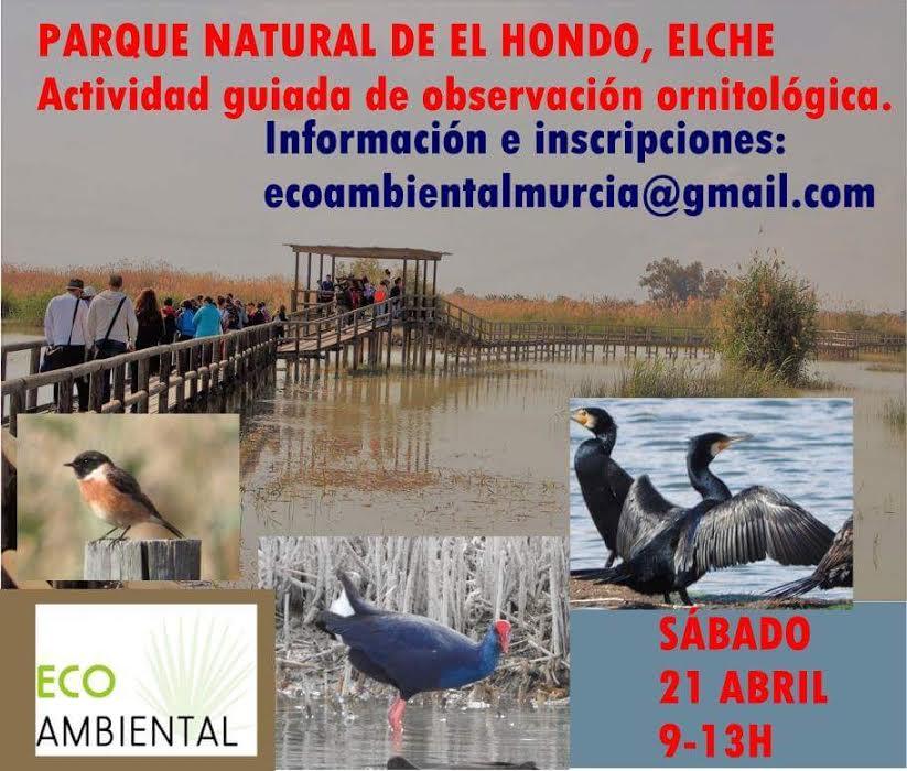 Observación ornitológica en El Hondo, con EcoAmbiental