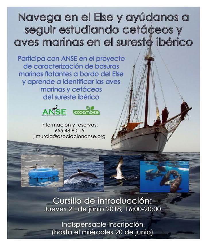 Voluntariado en en ELSE: cetáceos , aves y basuras marinas, con ANSE