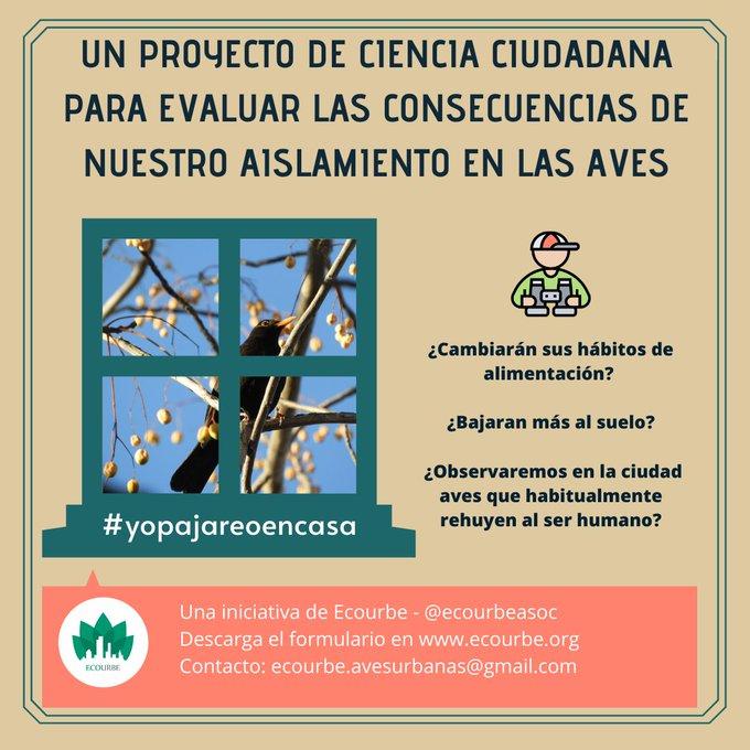 Evaluación de las consecuencias del confinamiento en aves urbanas, con Ecourbe