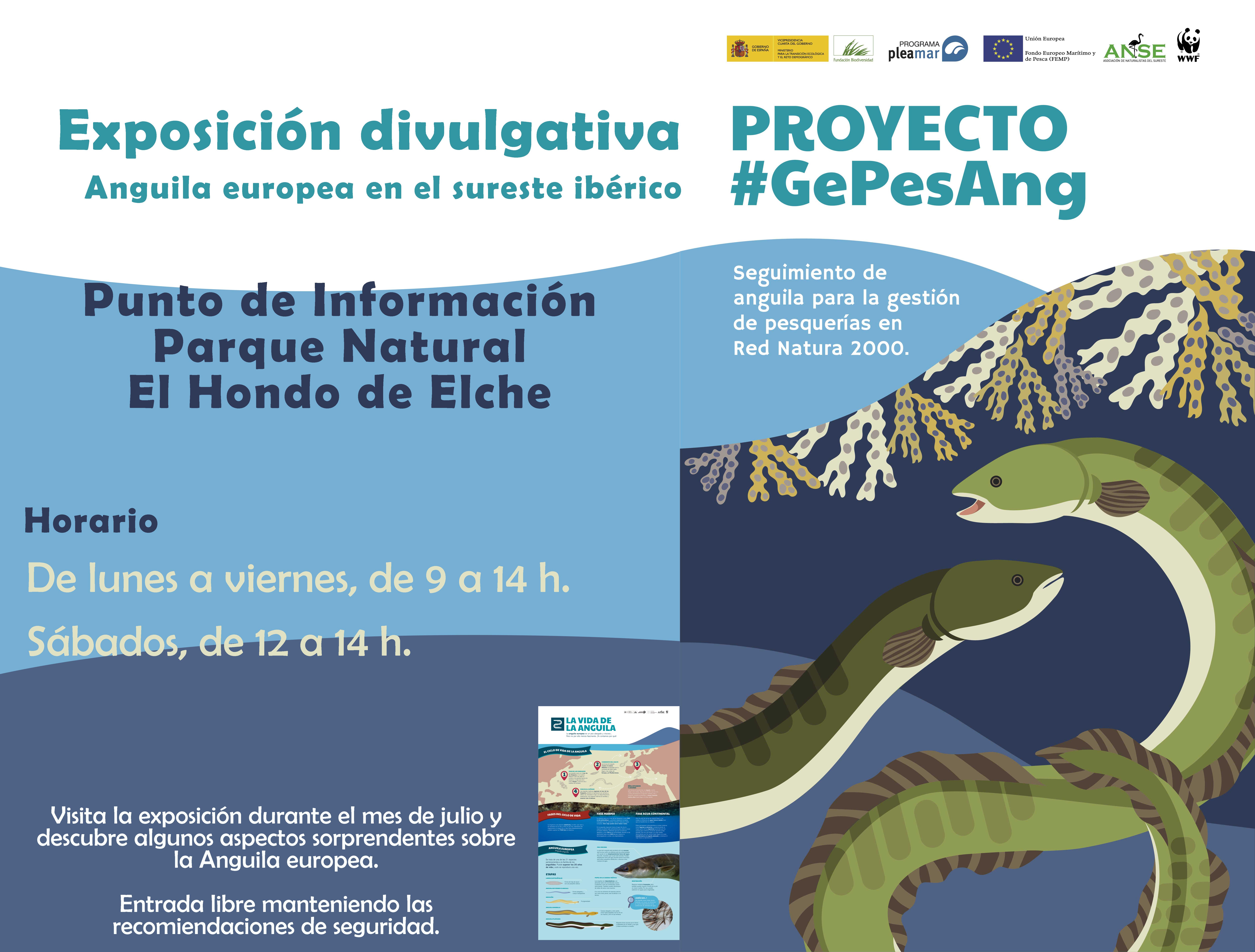 Expo sobre la anguila europea, con ANSE