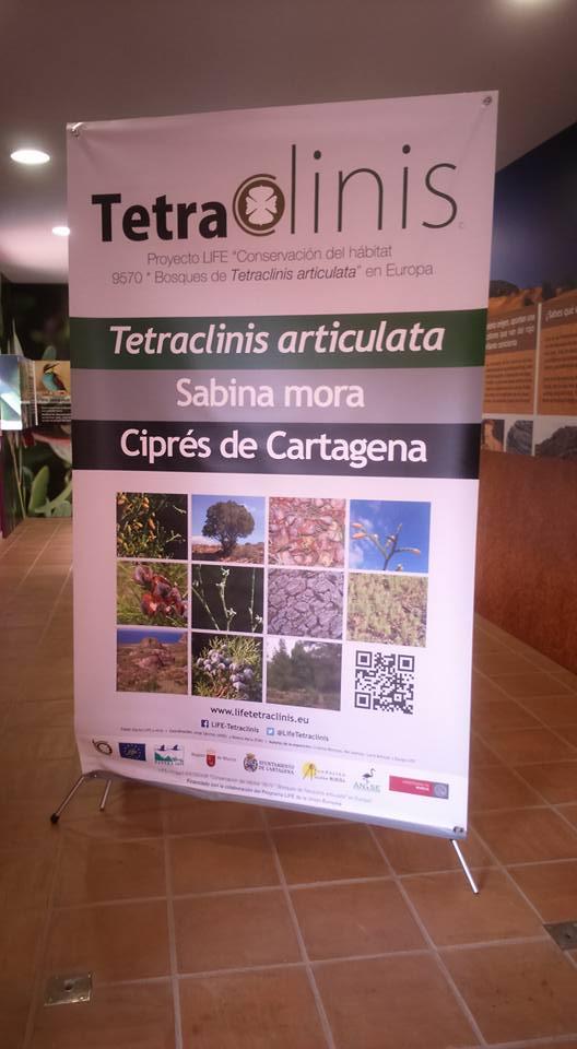 Expo sobre el ciprés de Cartagena. Imagen: Xiruca Martínez Penas.