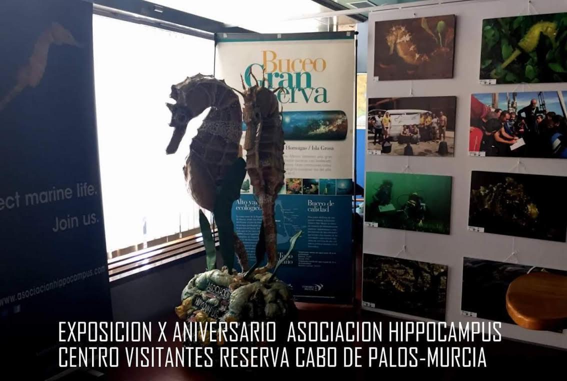 Expo sobre el caballito de mar, con la Asociación Hippocampus