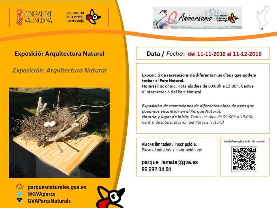Exposición de nidos y huevos