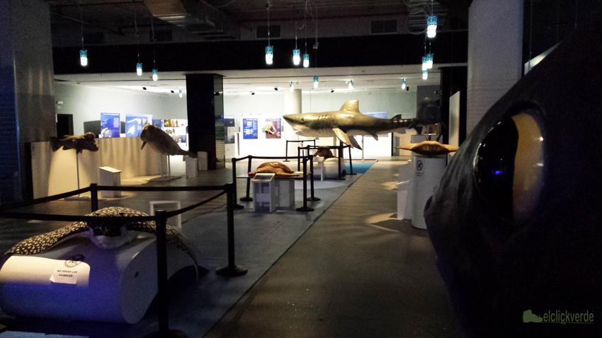 Uno de los ambientes de la Expo sobre los océanos 'Oceans World Exhibition' en la Nueva Condomina.