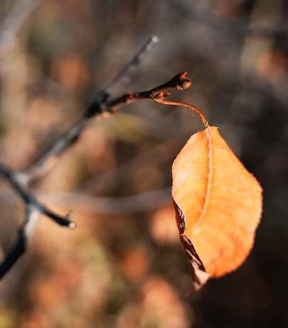 Hoja en otoño. Imagen: Pixabay