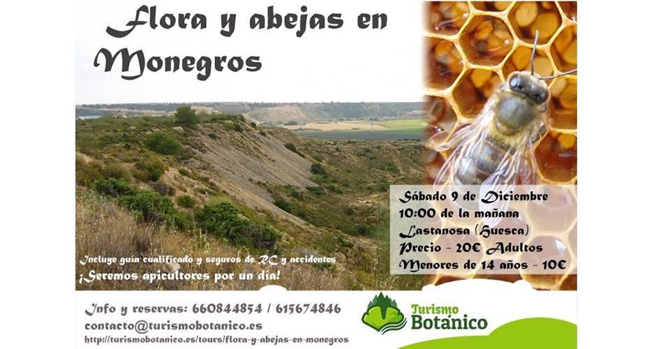 Flora y abejas de Los Monegros, con Turismo Botánico