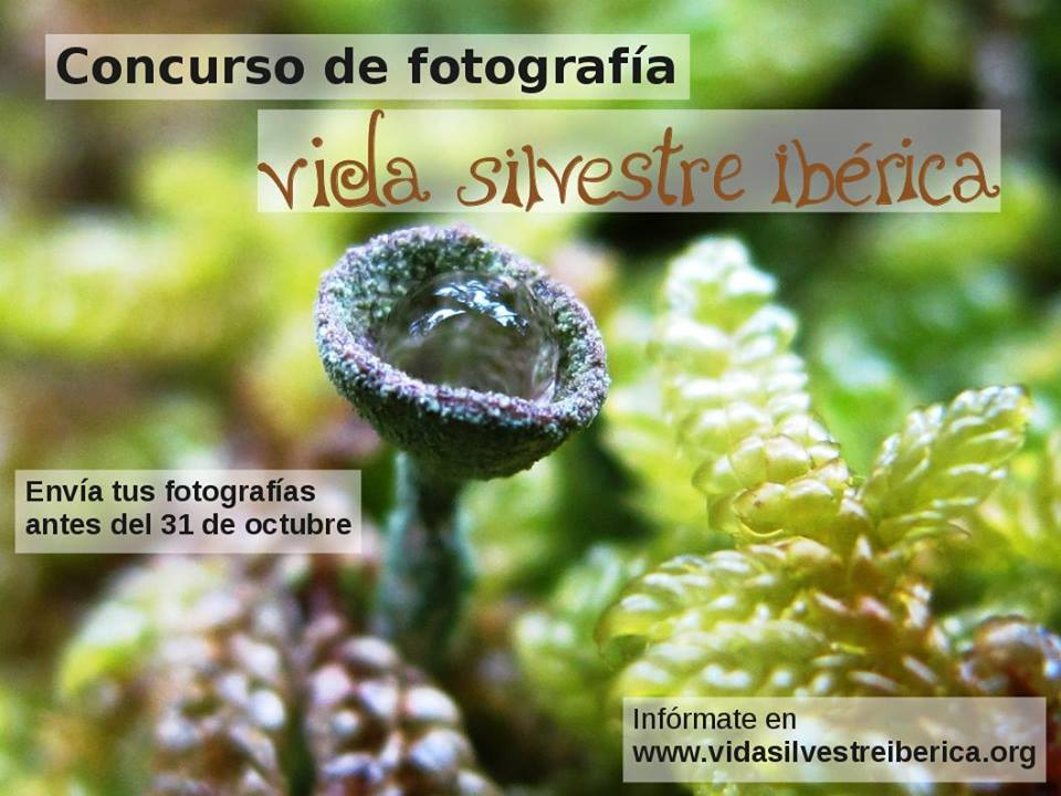 Concurso de Fotos con Vida Silvestre