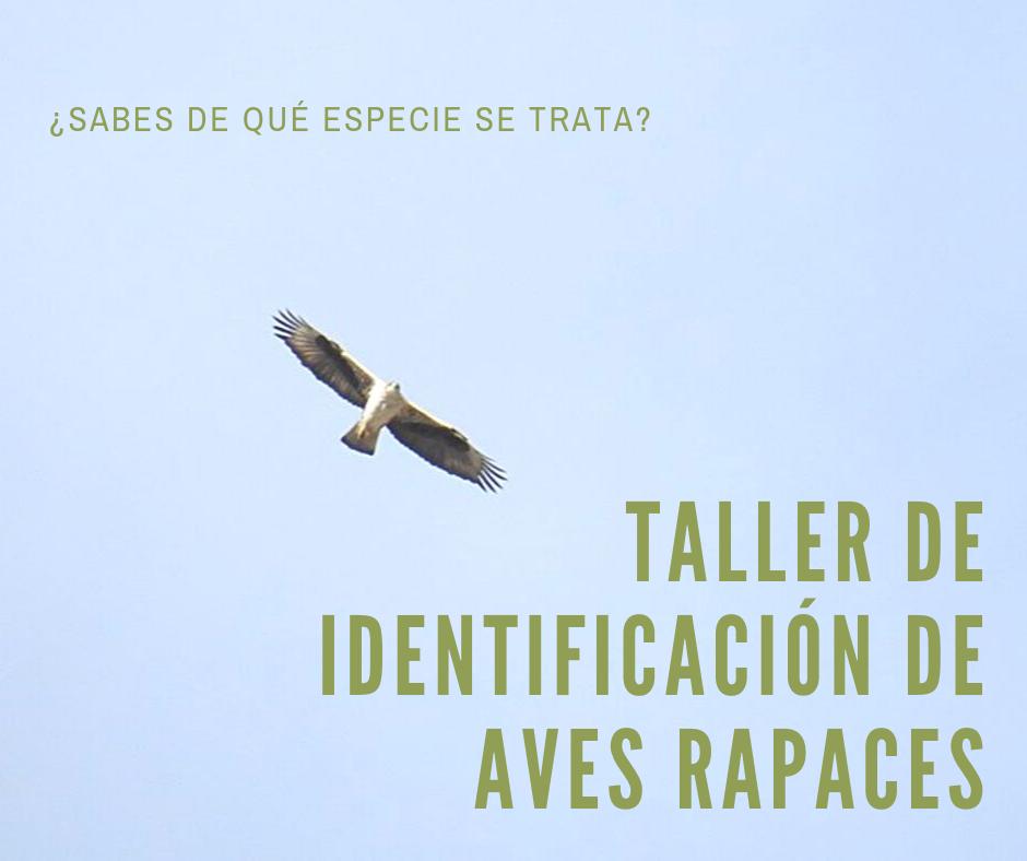 Taller de identificación de aves rapaces, con la UMH