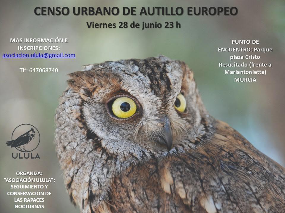 Censo urbano de autillo europeo, con Ulula