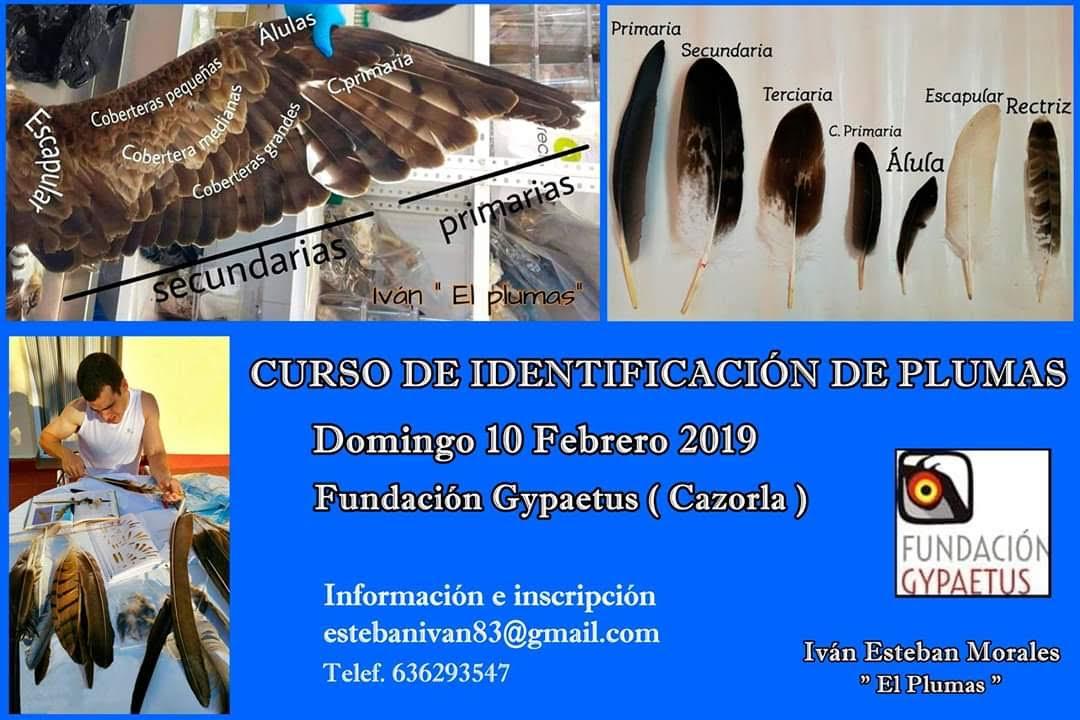 Curso de identificación de plumas, con Iván el Plumas