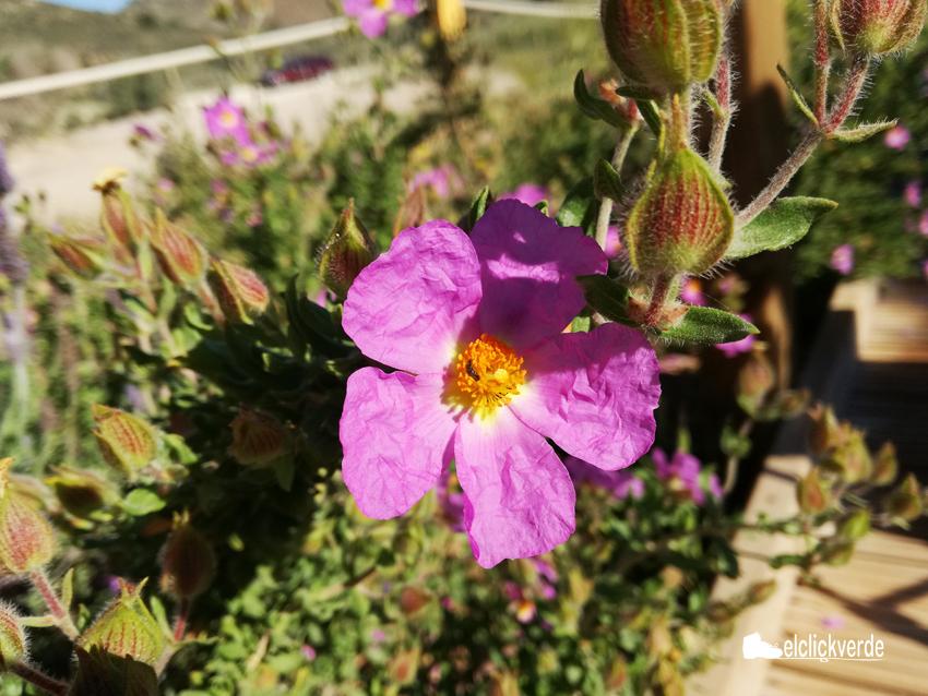Taller: Flora del litoral murciano-almeriense, con Turismo Botánico
