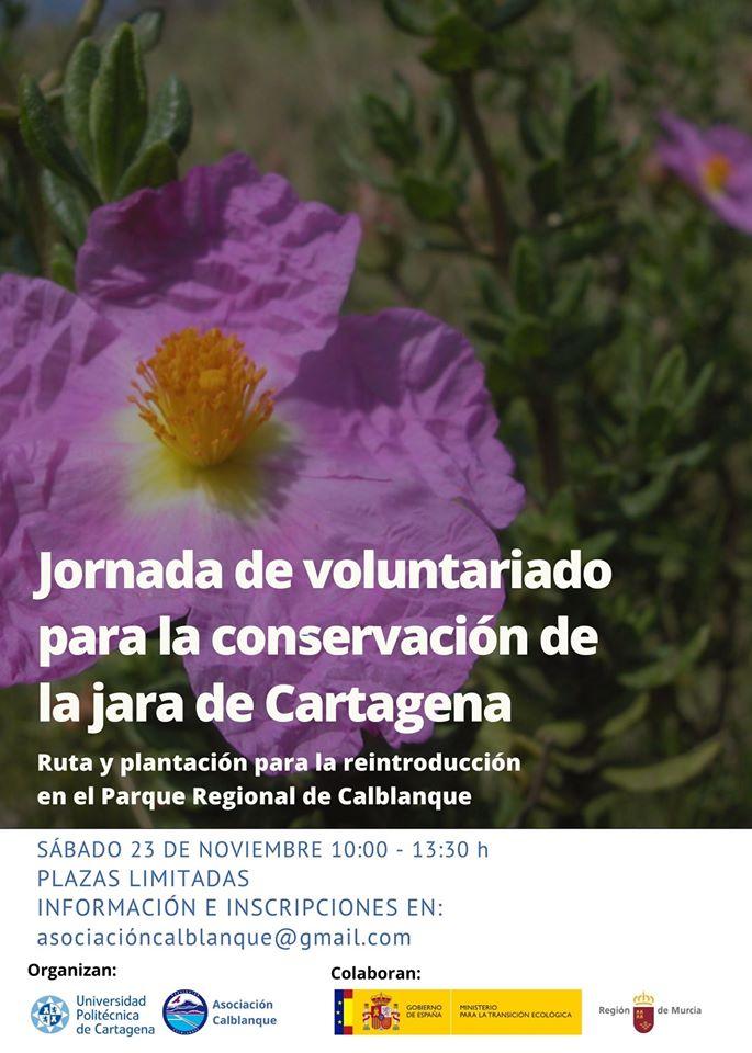 Jornada de conservación de la jara de Cartagena, con la UPCT y Asoc. Calblanque
