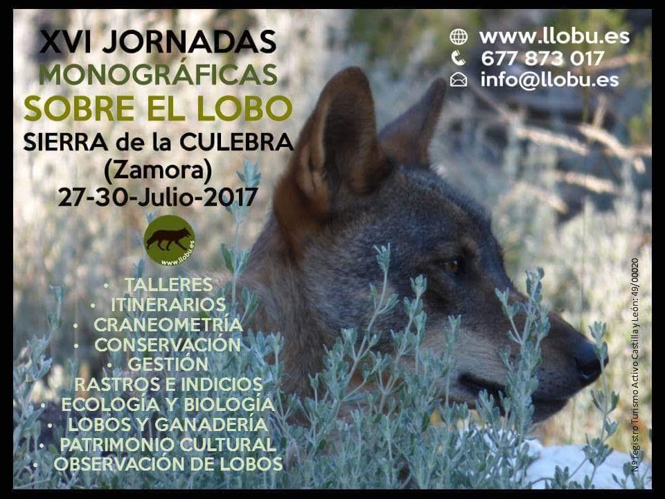 XVI Jornadas monográficas sobre el lobo, con Llobu