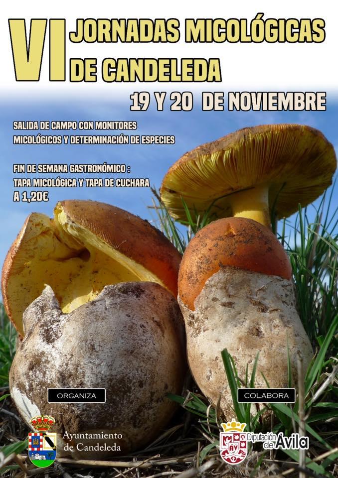 Cartel de las VI Jornadas Micológicas de Candeleda.