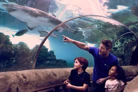 Voluntariado en un acuario, con Kattegatcentre