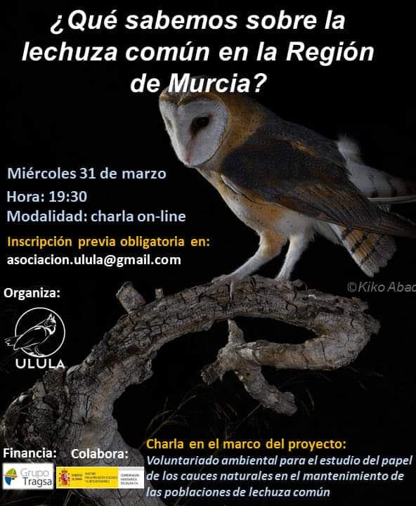 La lechuza común en la Región de Murcia, con Ulula
