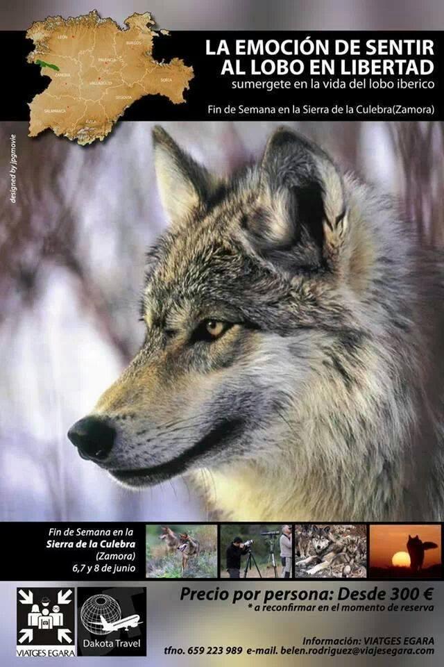 Fin de Semana buscando al lobo