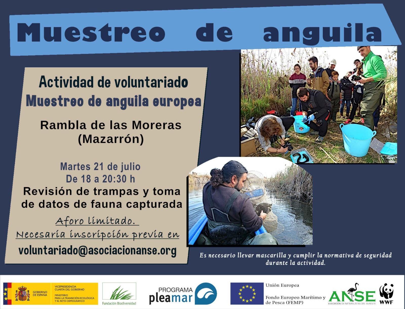 Seguimiento de anguila europea, con ANSE