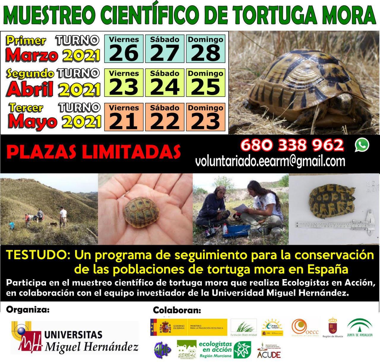 Muestreo científico de tortuga mora, con Ecologistas en Acción