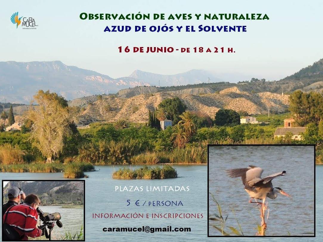 Observación de aves en Ojós, con Caramucel