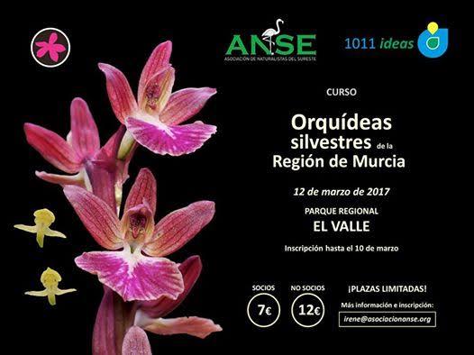 Curso sobre orquídeas silvestres de la Región de Murcia, con ANSE y 1011 ideas