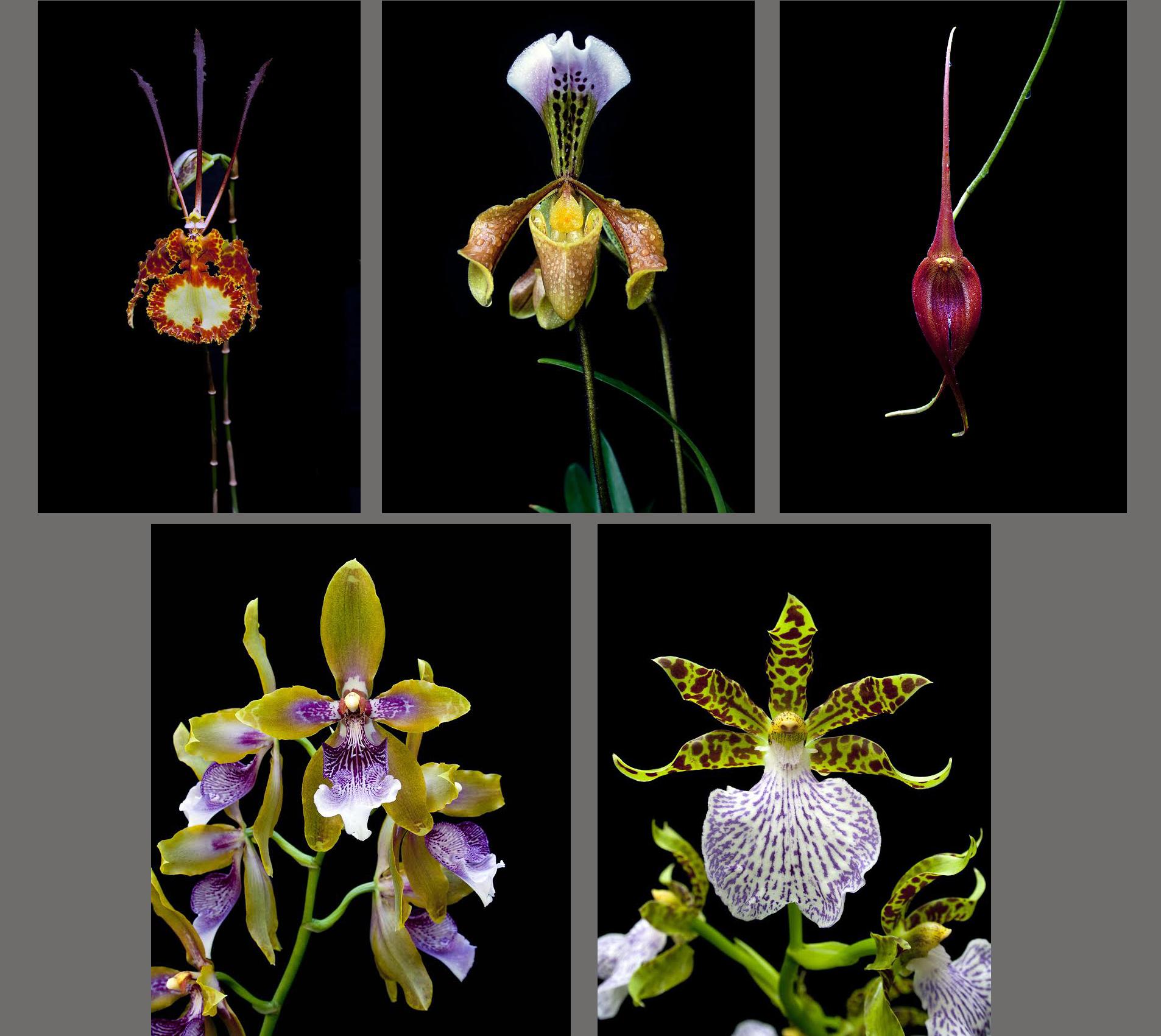 Composición con varias fotografías de la muestra de Gerardo José Torres García