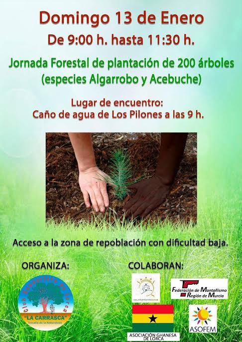 Plantación de algarrobos y acebuches, con La Carrasca