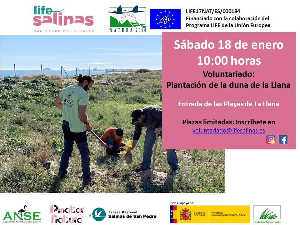 Plantación de una duna, con el LIFE Salinas