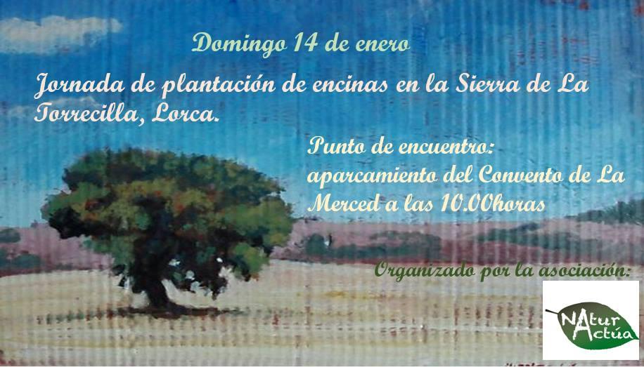 Jornada de plantación de árboles, con Naturactúa