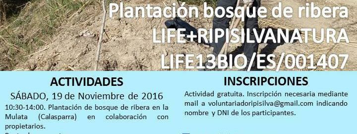 Plantación en la Mulata, con el LIFE Ripisilvanatura