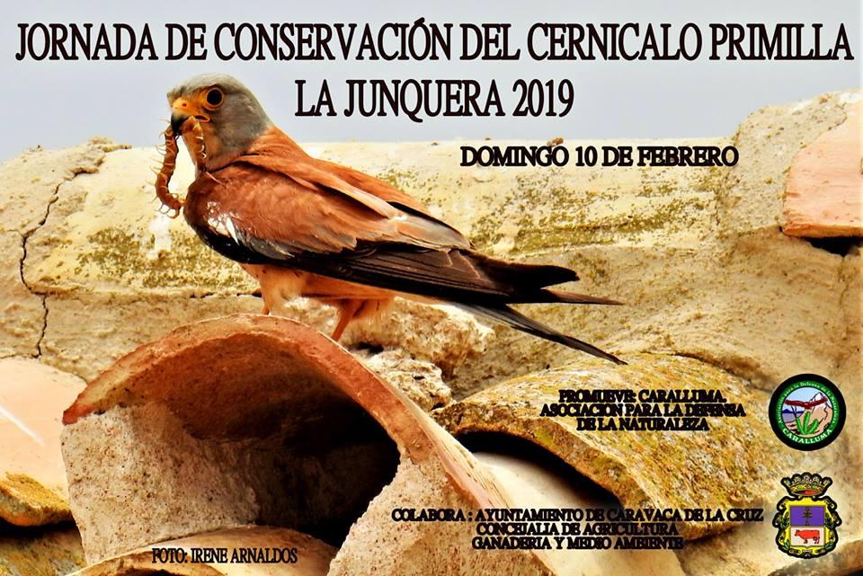 Jornada de conservación del cernícalo primilla, con Caralluma