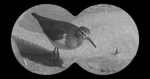 Ruta ornitológica en Almansa, con el Ayto. de Almansa
