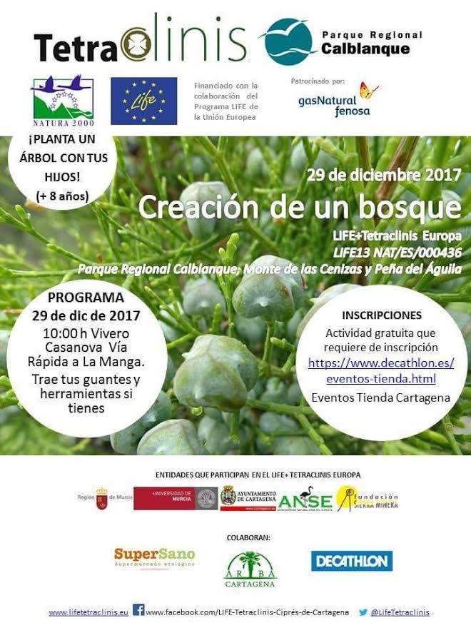 Reforestación con ciprés de Cartagena, con el LIFE Tetraclinis