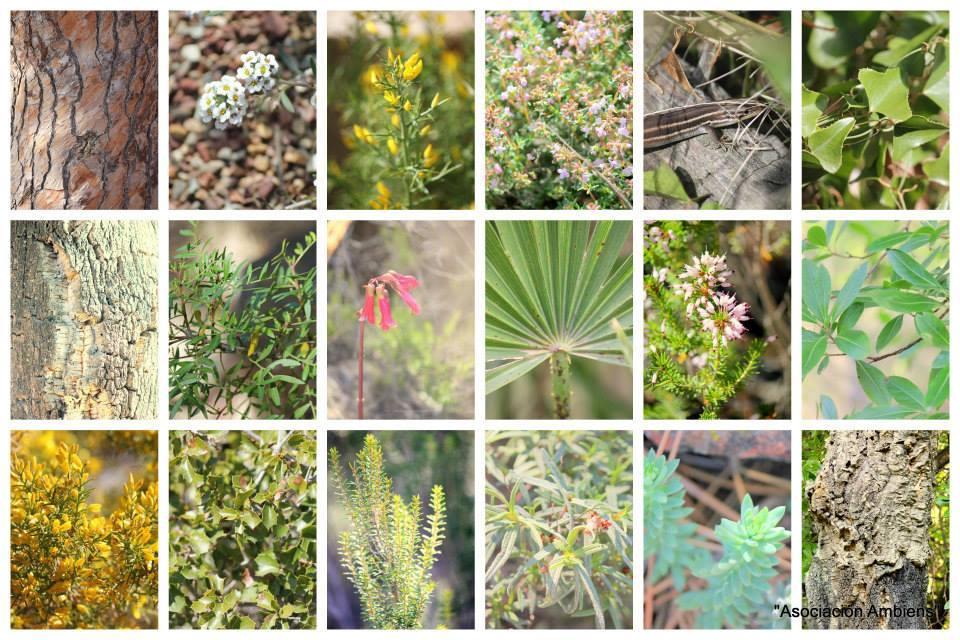 Reforestación + Revisión de Cajas Nido, con Ambiens