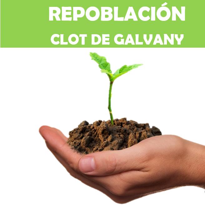 Repoblación en el Clot de Galvany, con la UMH